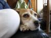 Dumbo20070715_092