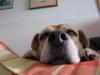 Dumbo20070916_088