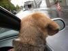 Dumbo20071021_022