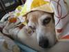 Dumbo_20071202_047
