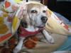 Dumbo_20071202_044