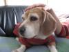 Dumbo_20071202_031