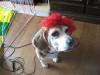Dumbo_20071223_031