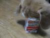 Dumbo_20071223_060