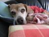 Dumbo_20080211_12