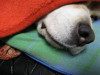 Dumbo_20080309_63