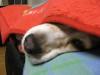 Dumbo_20080309_62