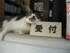 Dumbo_200800511_48