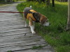 Dumbo_200800518_100