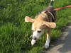 Dumbo_200800518_114