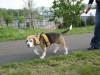 Dumbo_200800518_121