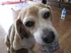 Dumbo_200800518_175