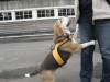 Dumbo_200800525_064