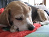 Dumbo_200800525_091