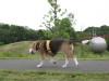 Dumbo_200800629_22