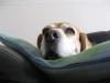 Dumbo_200800628_06