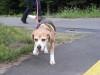 Dumbo_200800715_035