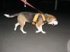 Dumbo_200800726_49