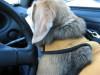 Dumbo_20080831_36