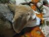 Dumbo_20080912_01