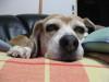 Dumbo_20080912_11