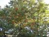 Dumbo_20080914_130