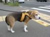 Dumbo_20080928_21