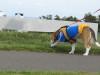 Dumbo_20081005_39