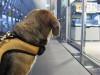 Dumbo_20080920_69