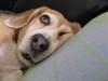 Dumbo_20081109_06