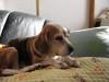 Dumbo_20081109_09