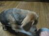Dumbo_20081109_70