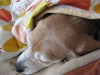 Dumbo_20081123_02