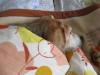 Dumbo_20081123_06