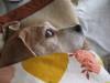 Dumbo_20081123_10