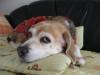 Dumbo_20081130_03