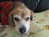 Dumbo_20081130_08