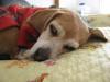Dumbo_20081130_09