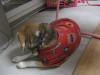 Dumbo_20081206_18