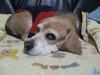 Dumbo_20081214_111