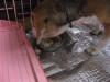 Dumbo_20090115_02