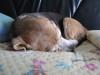 Dumbo_20090111_04