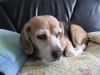 Dumbo_20090111_15