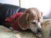 Dumbo_20090111_19