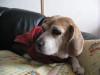 Dumbo_20090111_20