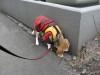 Dumbo_20090322_02