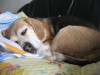 Dumbo_20090211_11