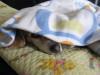 Dumbo_20090211_12