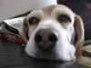 Dumbo_20090211_27