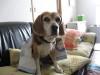 Dumbo_20090211_16
